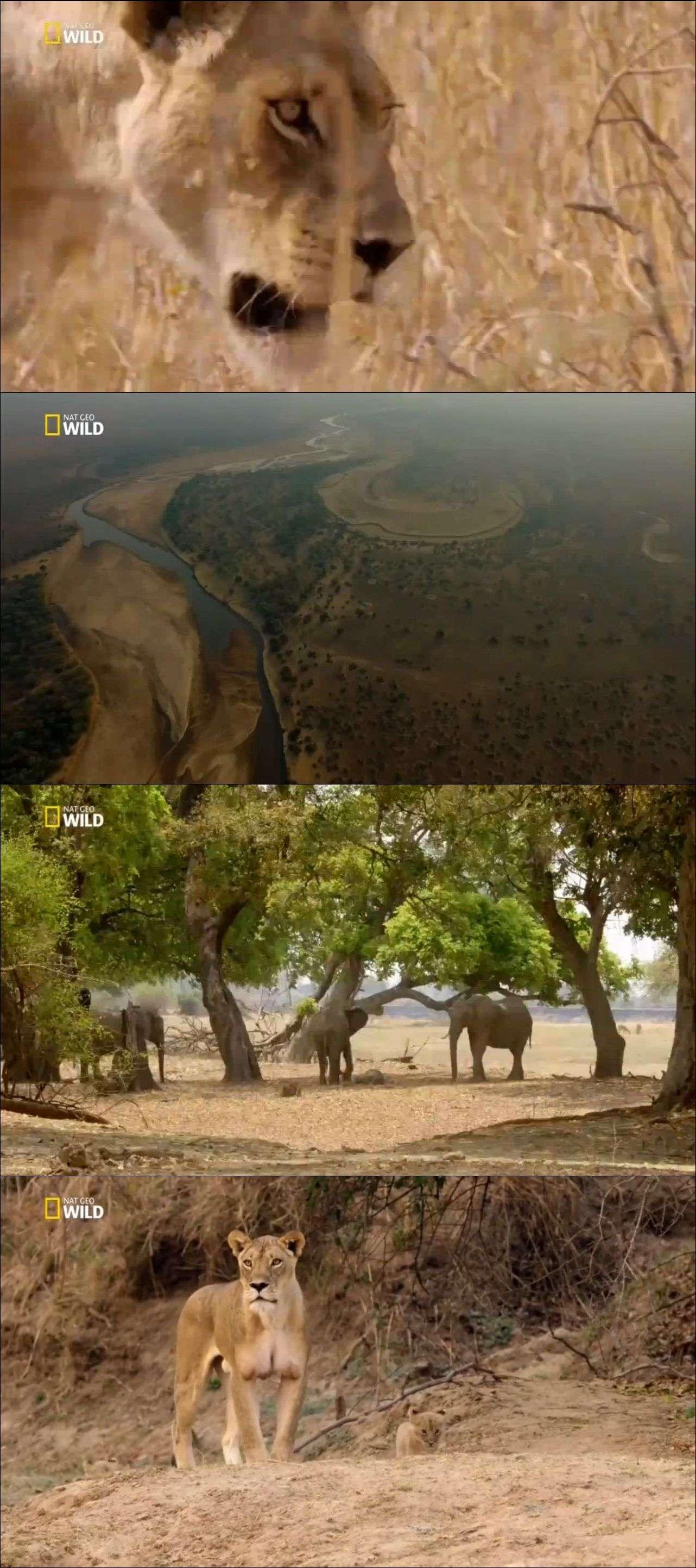 Nat Geo Wild Afrika'nın Avcıları belgesel serisi türkçe dublaj indir