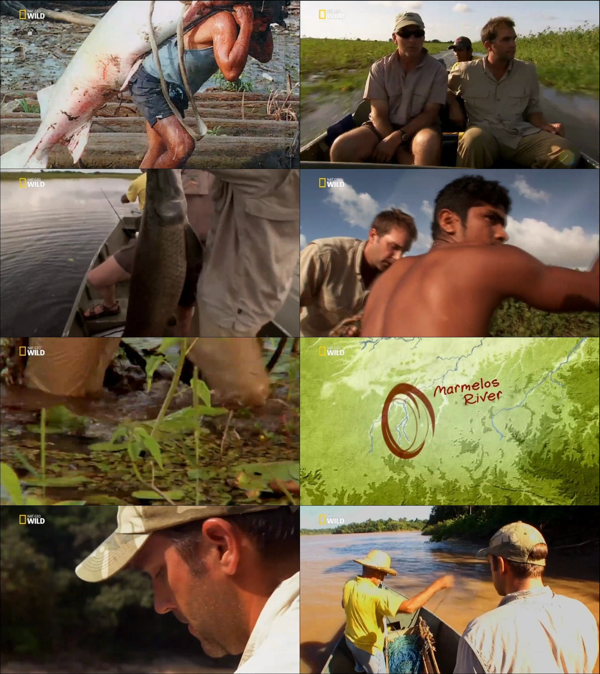 Nat Geo Wild Amazon'un Dev Balıkları belgesel serisi türkçe dublaj indir