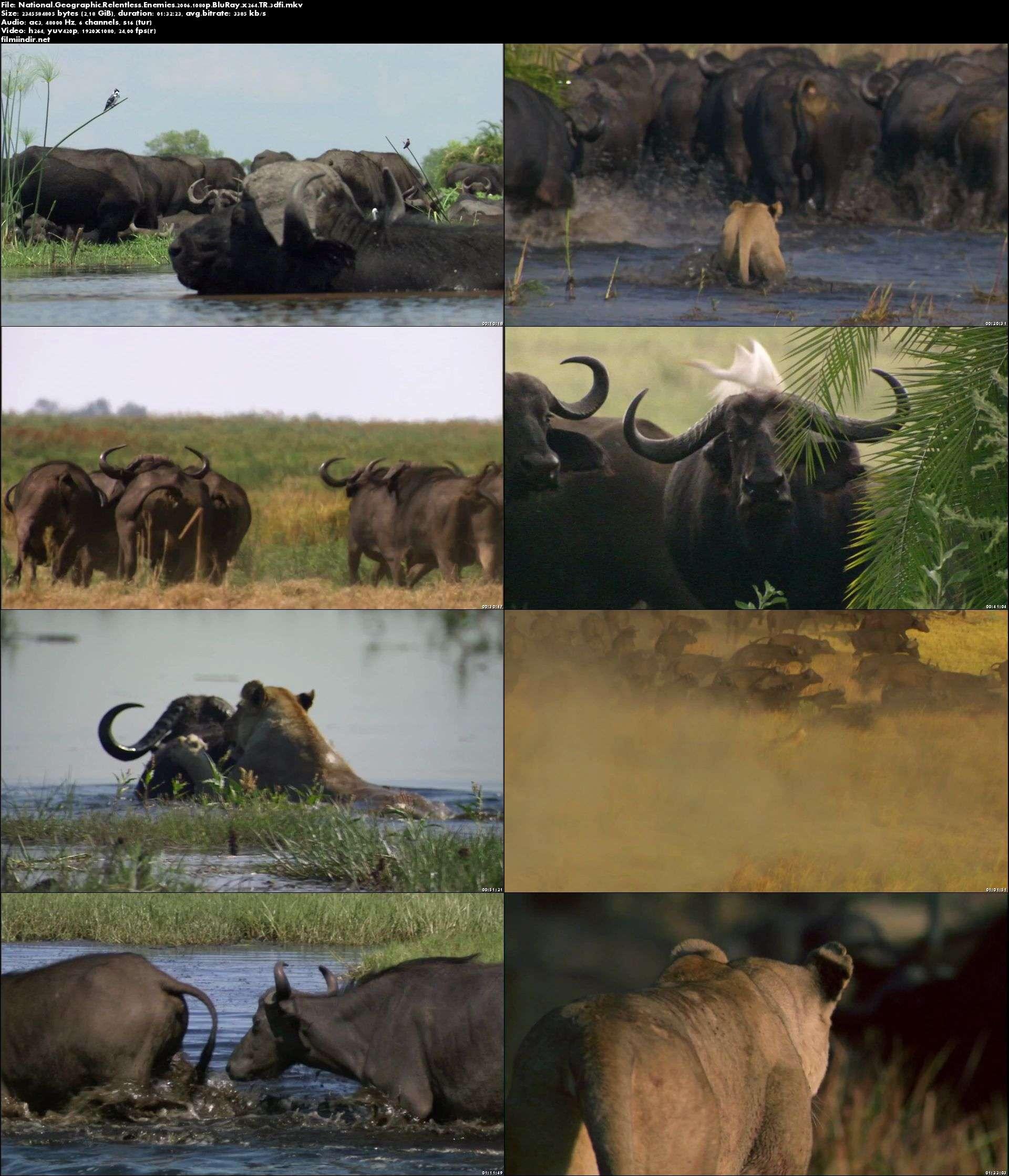 National Geographic Amansız Düşmanlar - Relentless Enemies (2006) türkçe dublaj belgesel indir