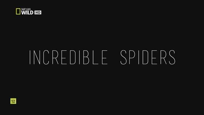 Удивительные пауки | HDTVRip 720p | Р1