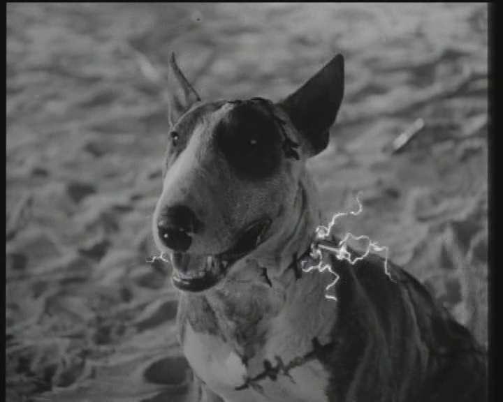 Frankenweenie 1984 Tim Burton Dvdrip Free Download Cinema Of The World
