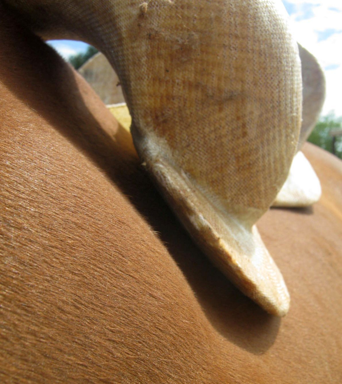 I have fallen hopelessly in love with a saddle    - Page 2 - The