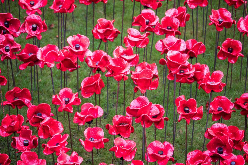 Hommage aux soldats morts pour le Royaume-Uni - Coquelicots Tour de Londres - Novembre 2014
