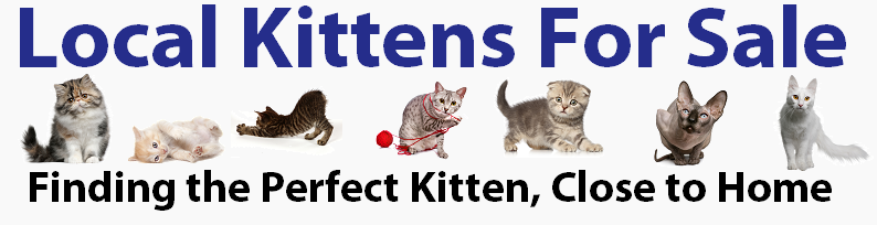 Bambino Cat Breeders And Information