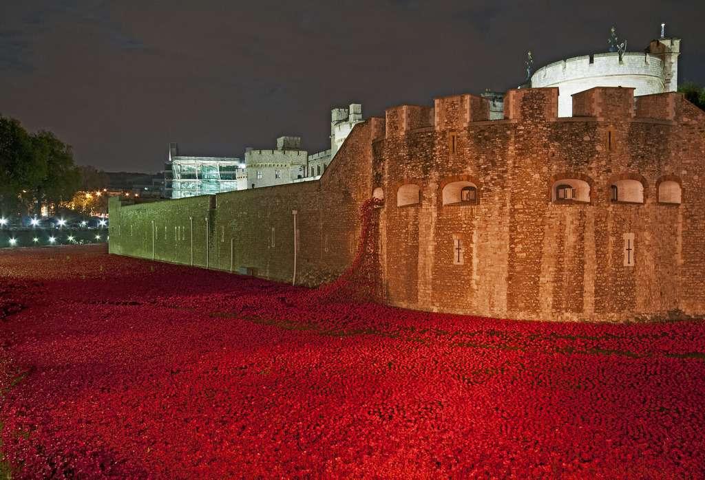 Hommage aux soldats morts pour le Royaume-Uni - Coquelicots de nuits Tour de Londres - Novembre 2014