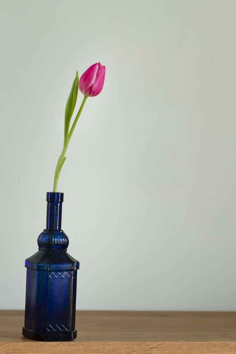 Tulipe rose(+ correction du 23/02) Jx64