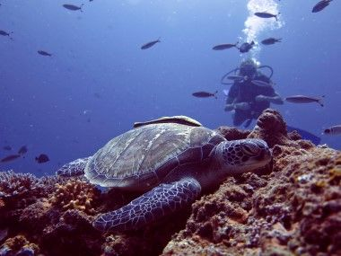 Turtles around the Gilis