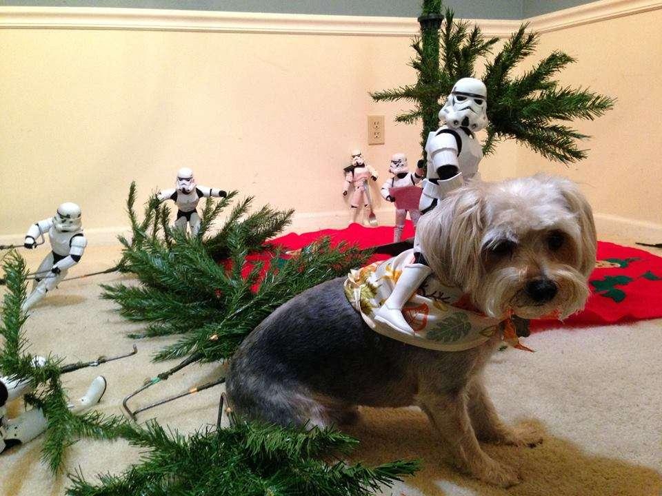 Stormtrooper sur un chien devant sapin de noel
