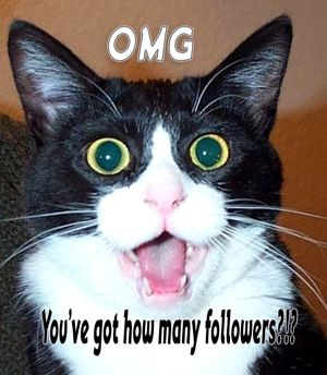 Shocked cat - Twitter followers
