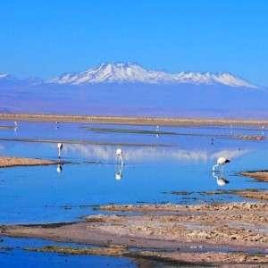 Flamingos on the Salt Flats in the Atacama