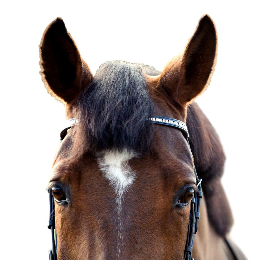 Horze-Spirit-Weston-Bridle-Narrow-Noseband-with-Flash-and-Web-Reins miniature 12