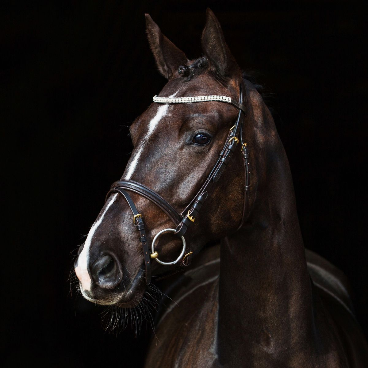 Horze-Trajan-Leather-Snaffle-Flash-Bridle-with-Narrow-Browband-and-Reins miniature 23