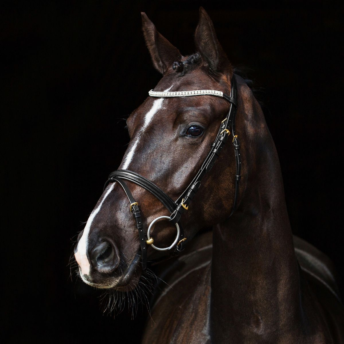 Horze-Trajan-Leather-Snaffle-Flash-Bridle-with-Narrow-Browband-and-Reins miniature 12