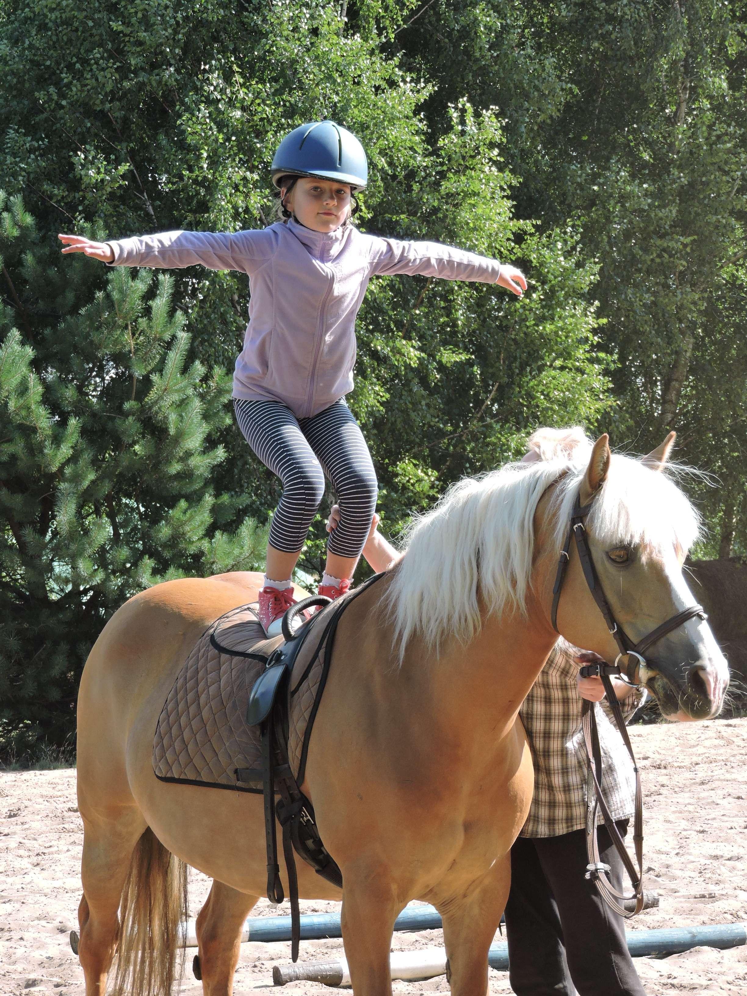 Koń dobry nawszystko