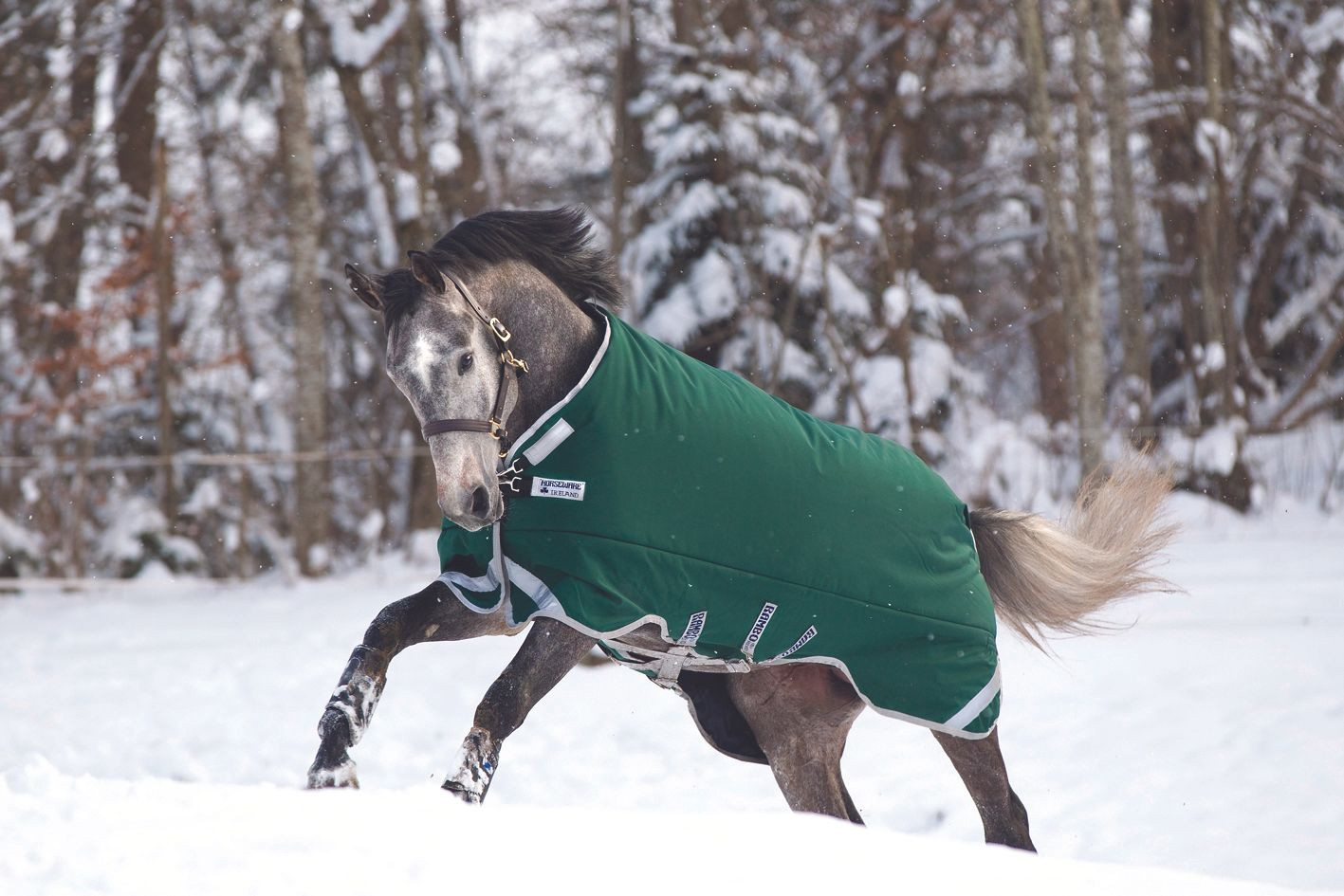 Horseware Ireland Rambo Original Turnout Blanket with with with Leg Arches 0g bfc4f9