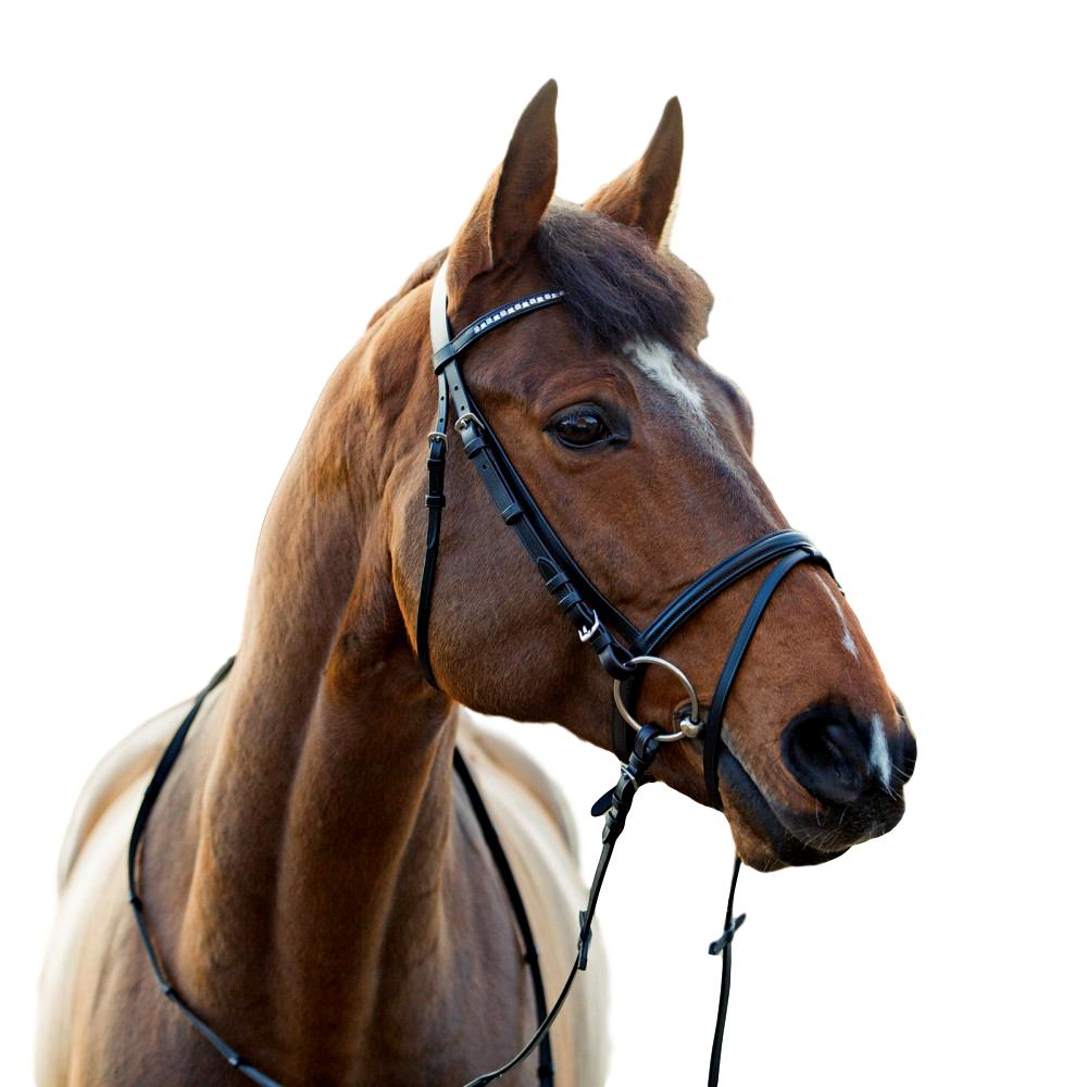 Horze-Spirit-Weston-Bridle-Narrow-Noseband-with-Flash-and-Web-Reins miniature 11