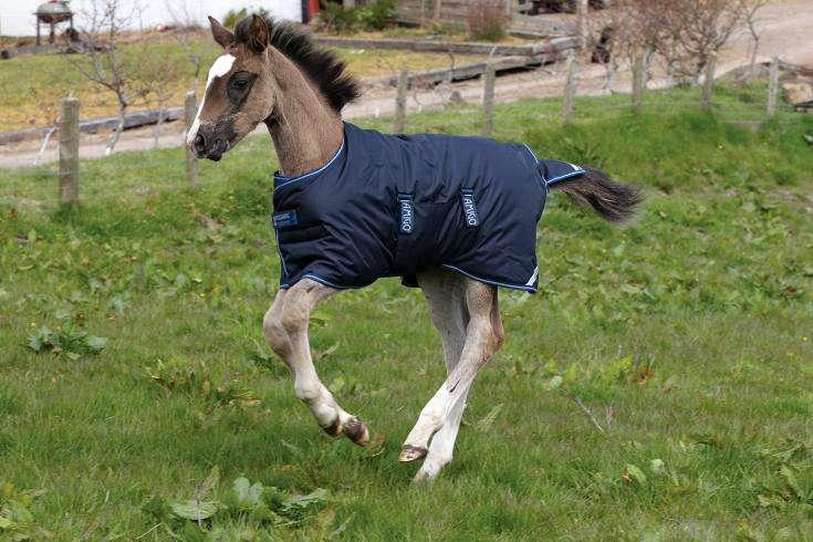 Amigo Foal Blanket 600d Turnout