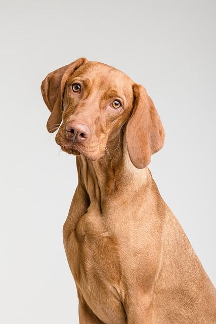 CC0 by P ter G bly s https://pixabay.com/en/dog-animal-canine-pet-portrait-3277414/