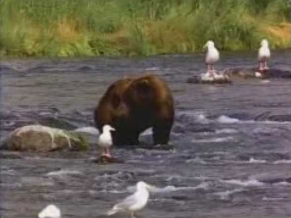 Picture of Example Video - Image 01