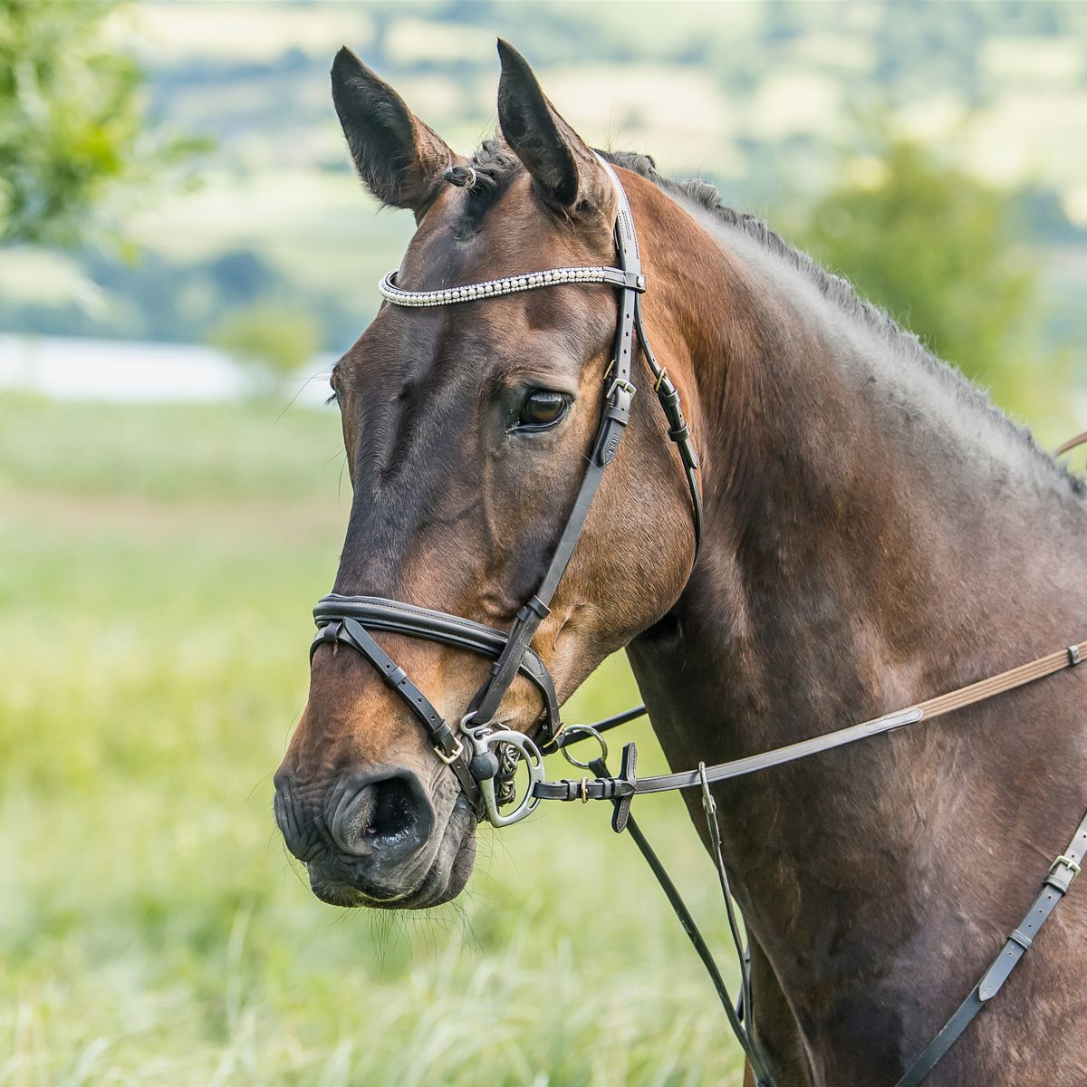 Horze-Trajan-Leather-Snaffle-Flash-Bridle-with-Narrow-Browband-and-Reins miniature 24