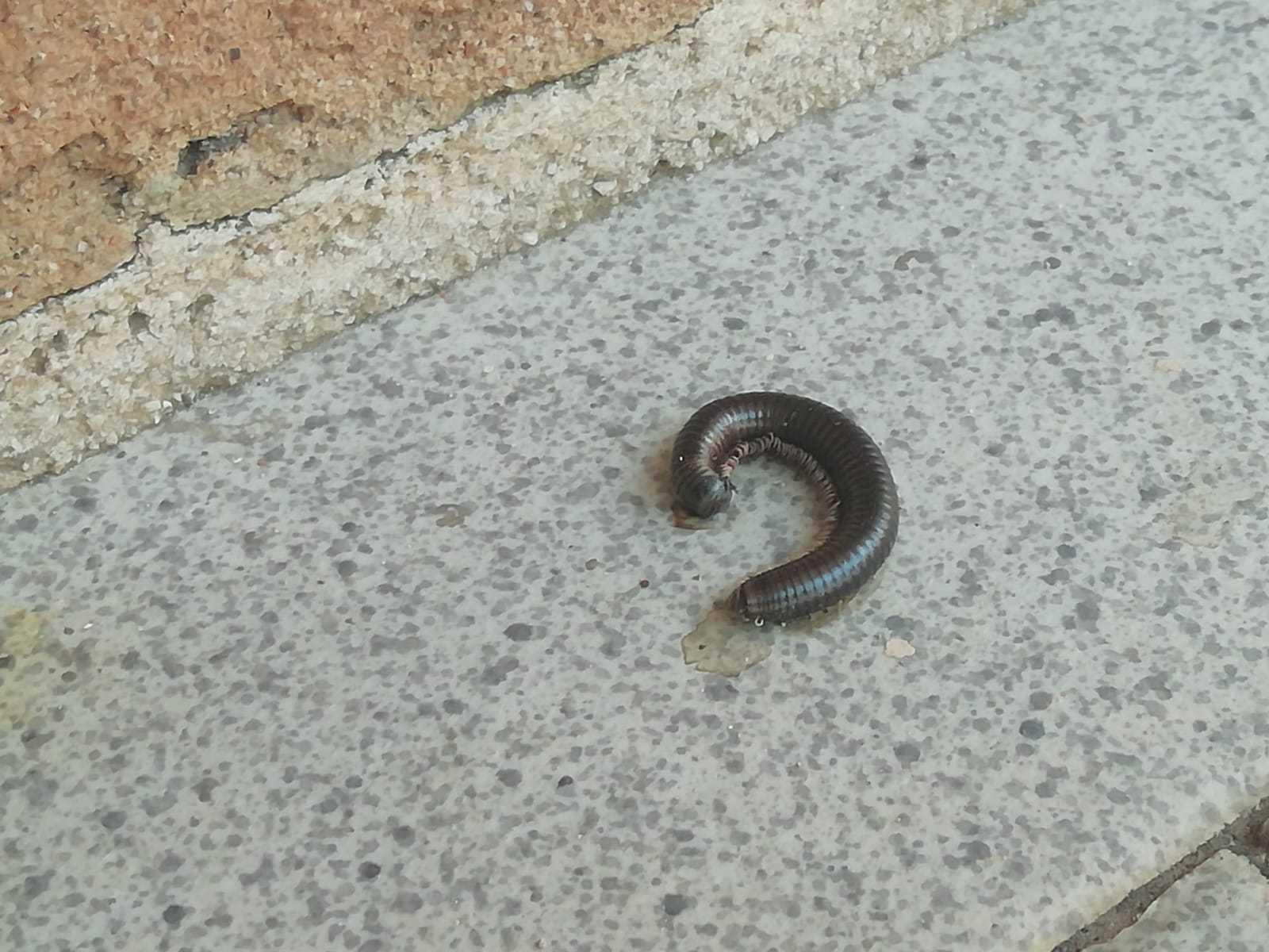 Sapete dirmi di che animale si tratta li trovo sui muri - Piccoli insetti sui muri di casa ...