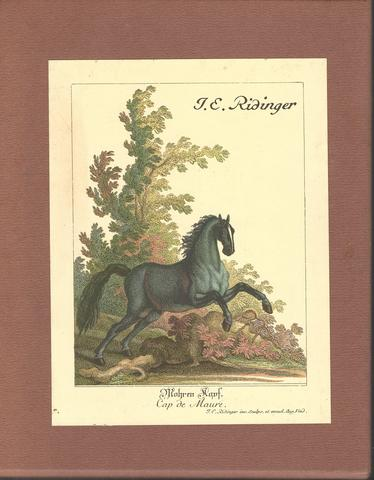 Vorstellung der Pferde / Description du Cheval German/English Book HC in Slipcase, Johann Elias Ridinger