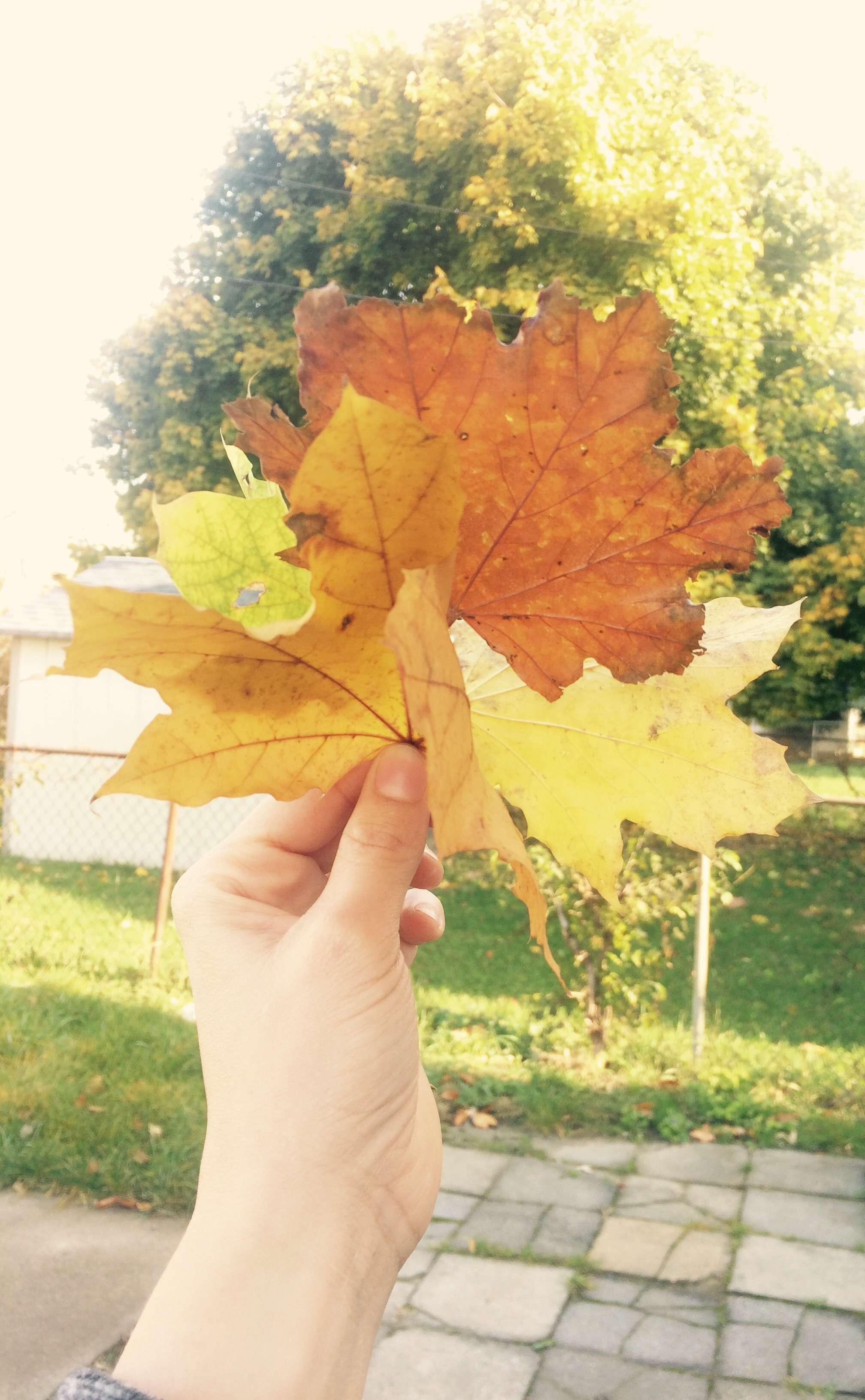Autumn/الخريف🍁🍂 Ylw8u6.jpg