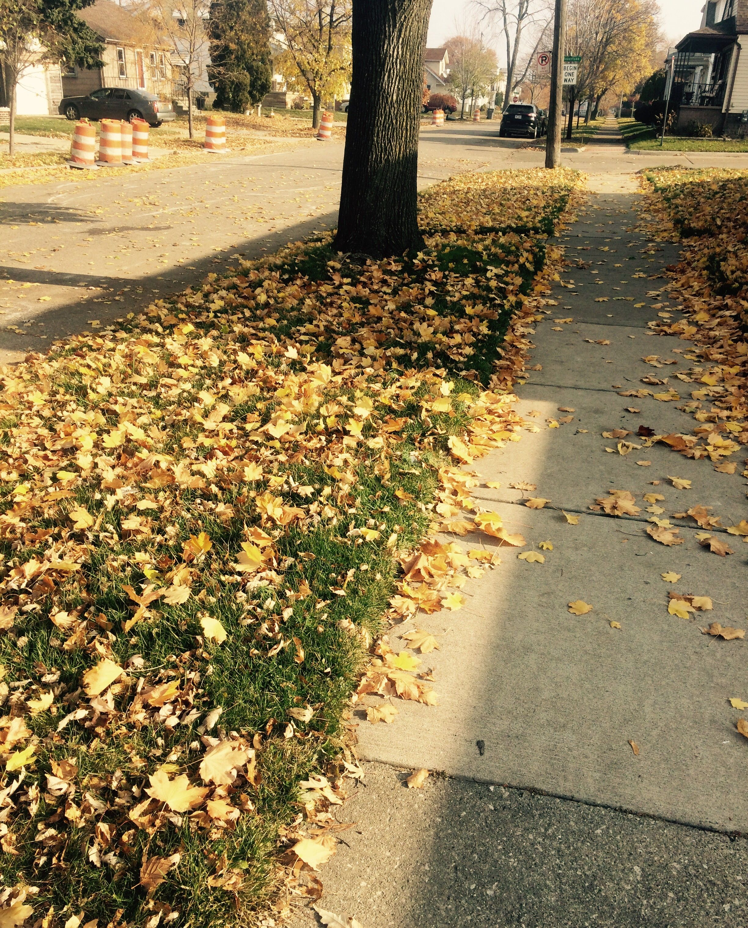 Autumn/الخريف🍁🍂 khHOfd.jpg