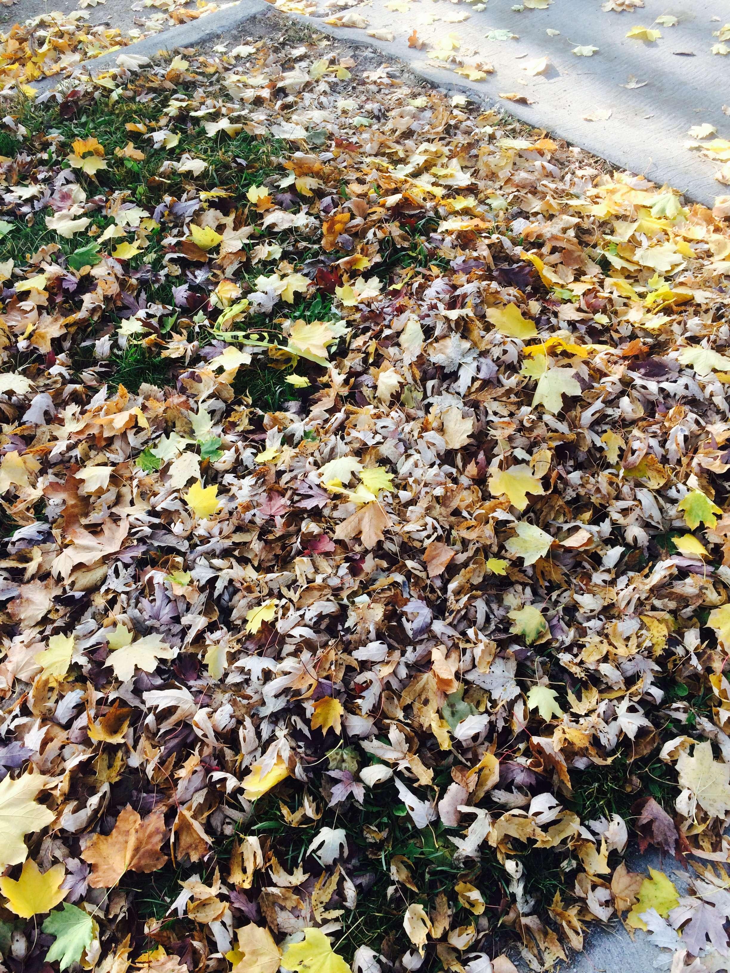 Autumn/الخريف🍁🍂 BQVYpz.jpg
