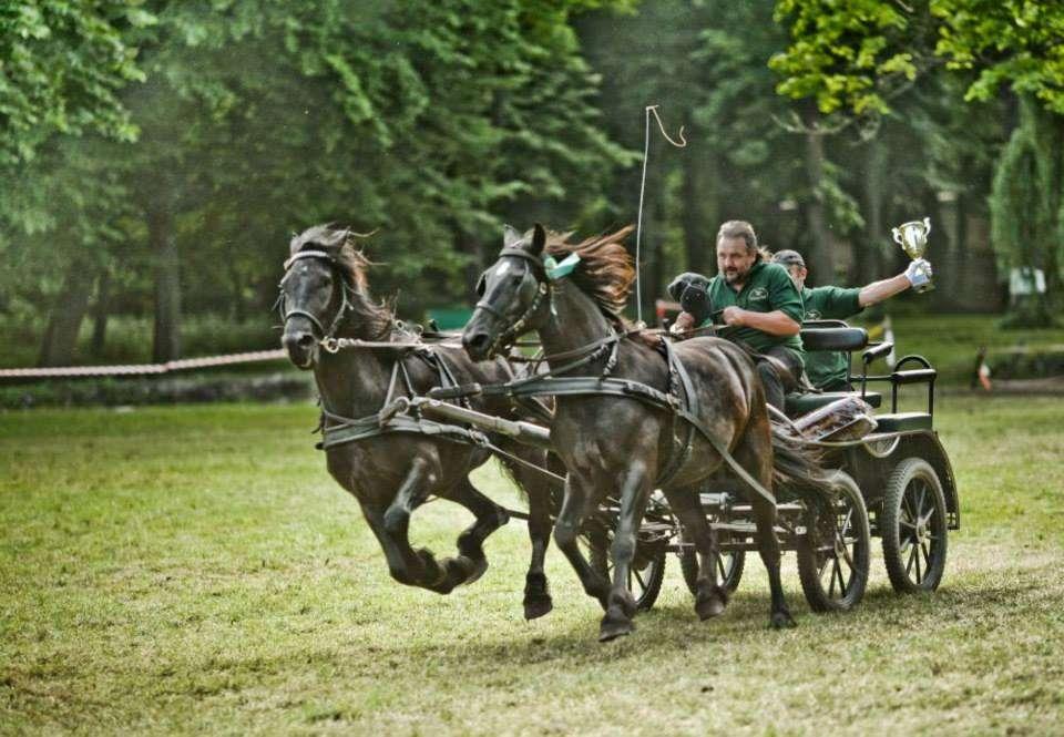Kasia – koń zsercem