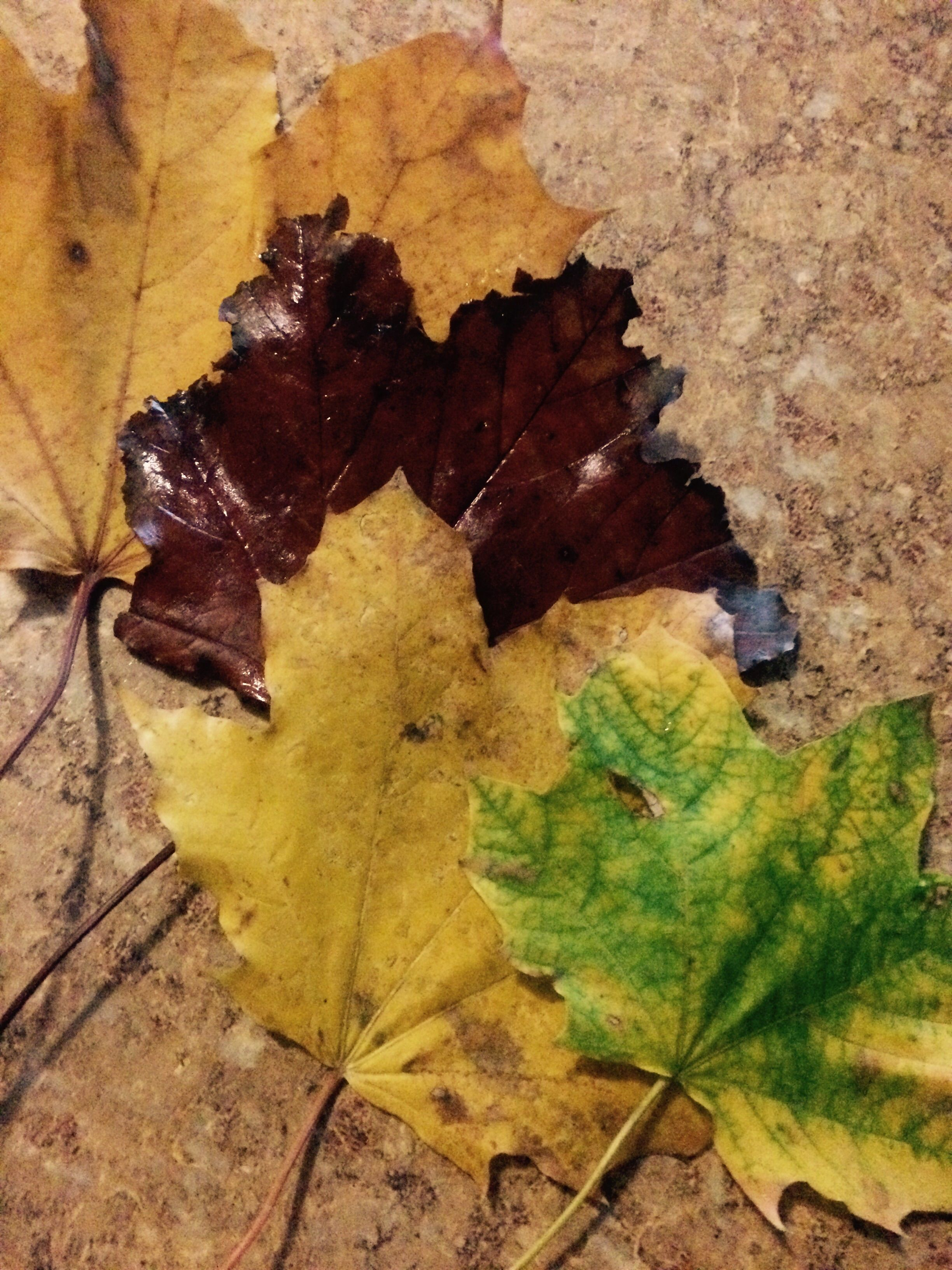 Autumn/الخريف🍁🍂 HU6dcT.jpg