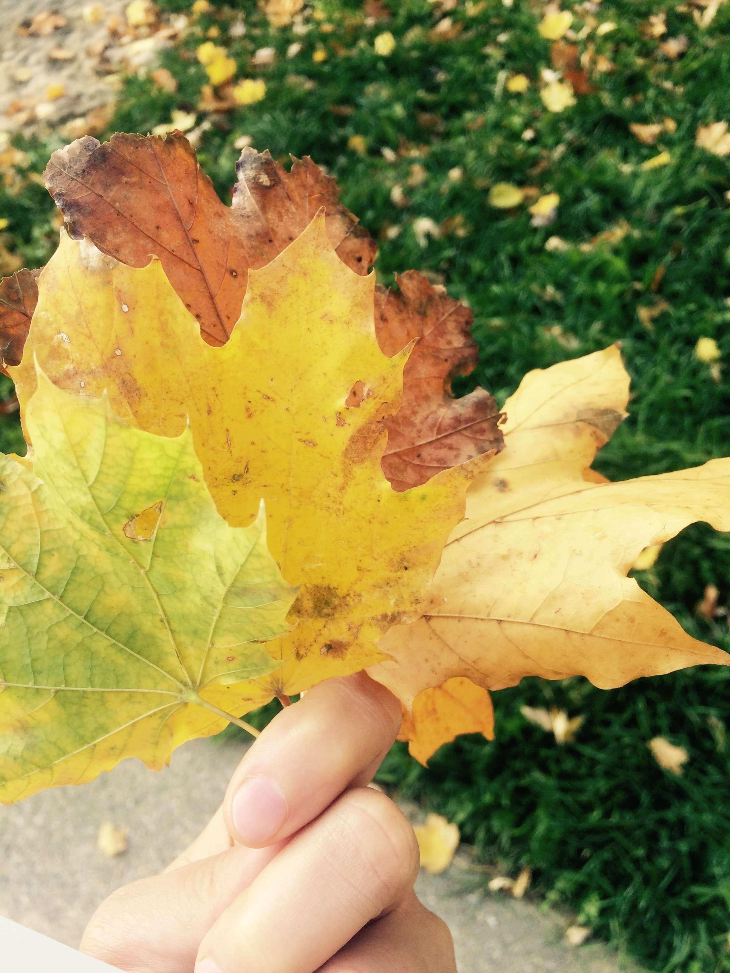 Autumn/الخريف🍁🍂 4hEnPp.jpg