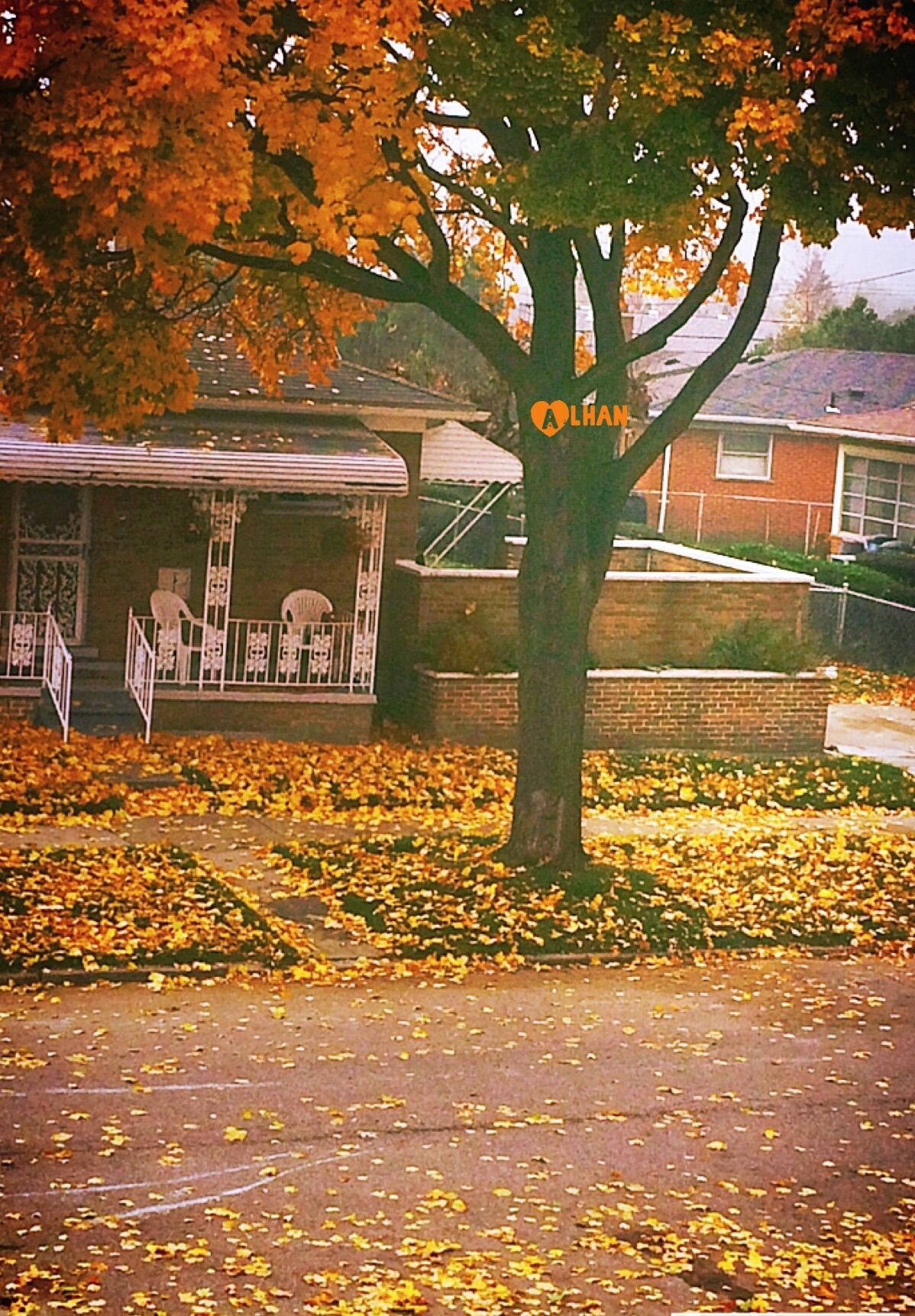 Autumn/الخريف🍁🍂 Hl0T7T.jpg