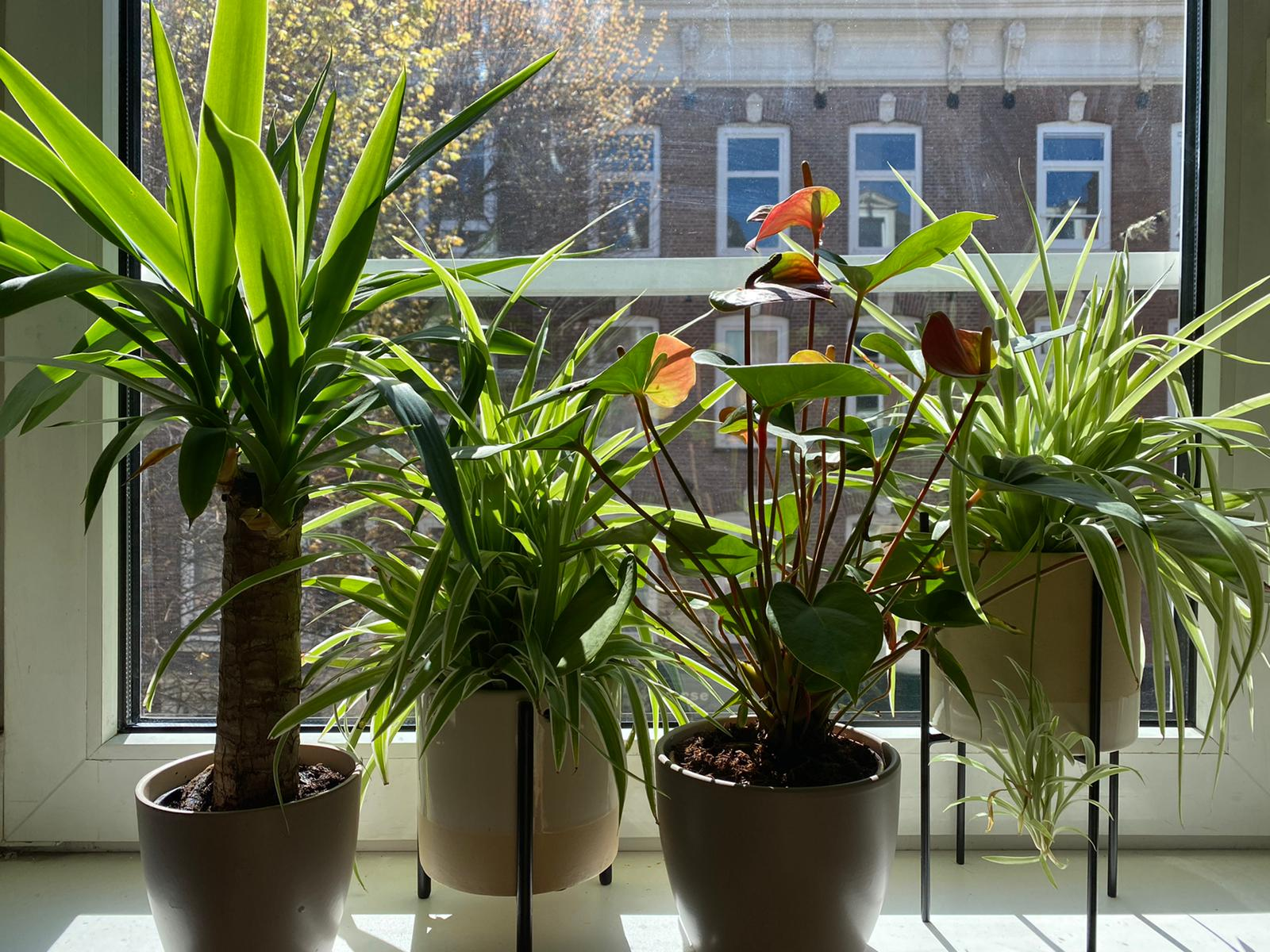 Potted plants in the sun on window sill
