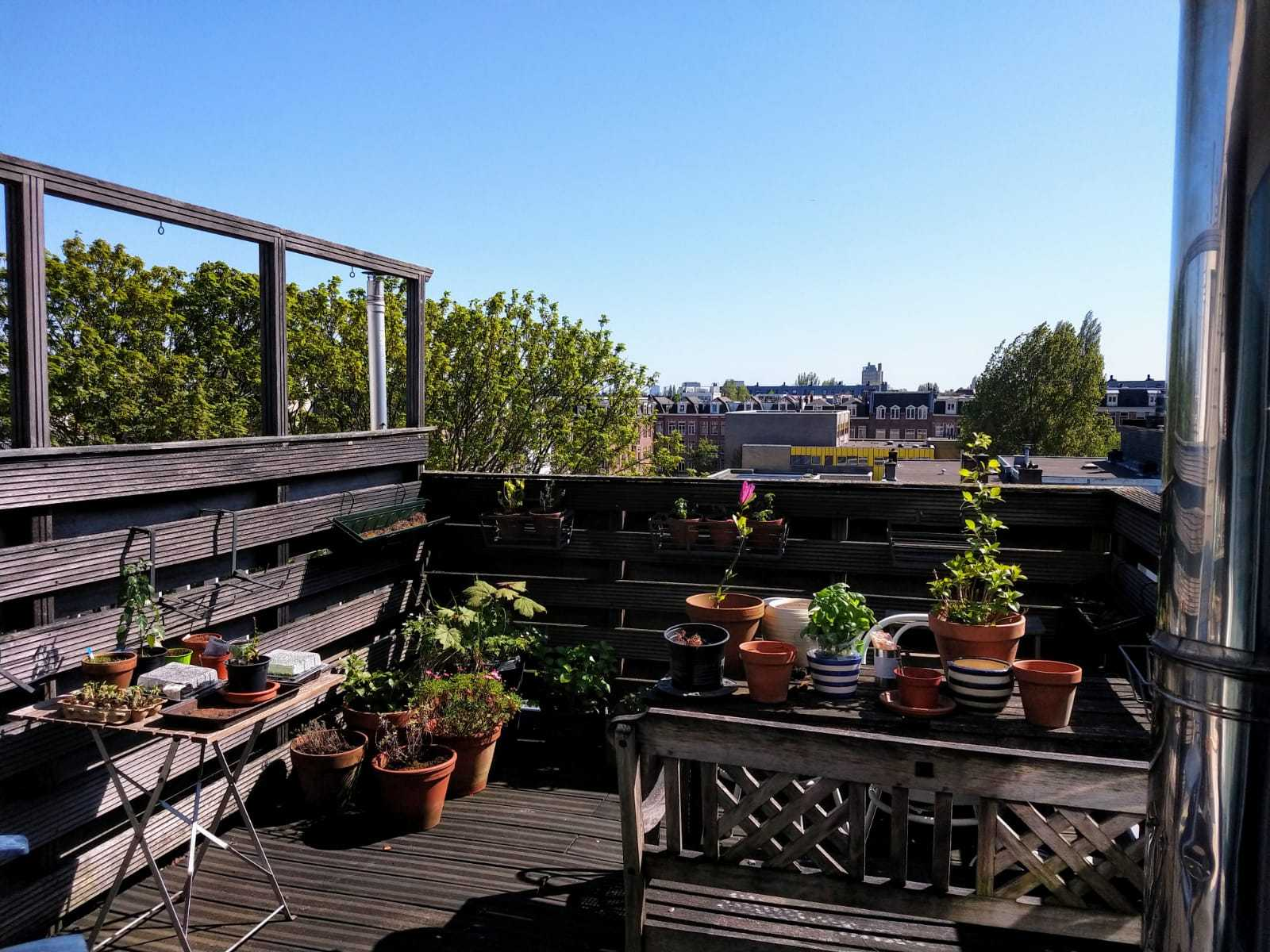 Roof terrace with plants