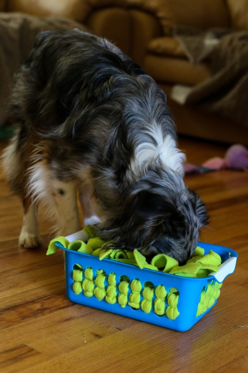 DIY Brain Teasers for Dogs