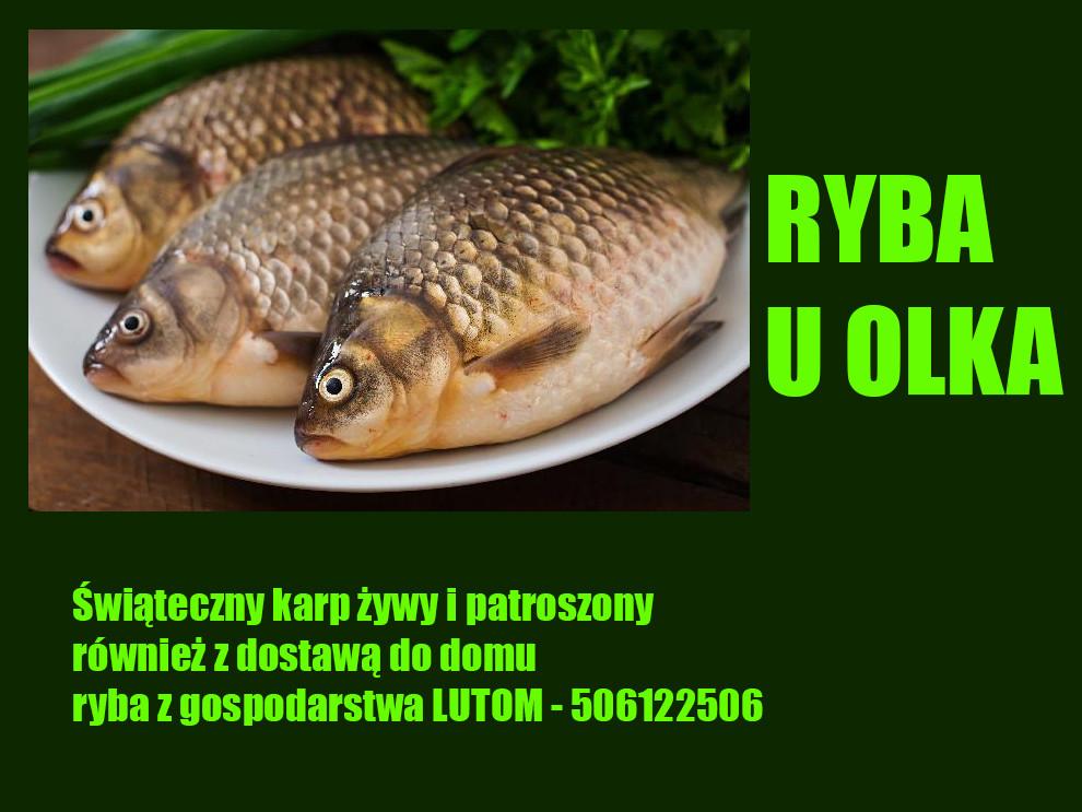 Ryba uOlka