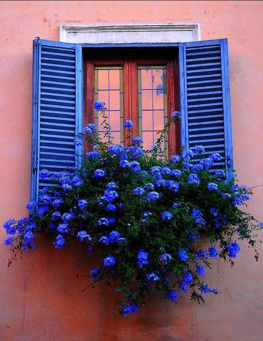 UFenêtre fleurie bleue