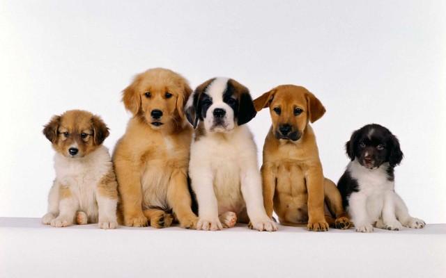 Cuales perros son recomendados para los niños