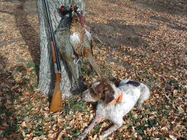 [Linked Image from imagizer.imageshack.com]