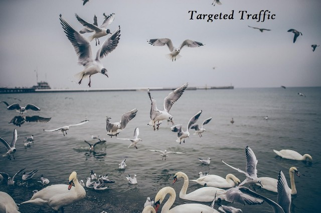 danielcortes.com - Targeted Traffic
