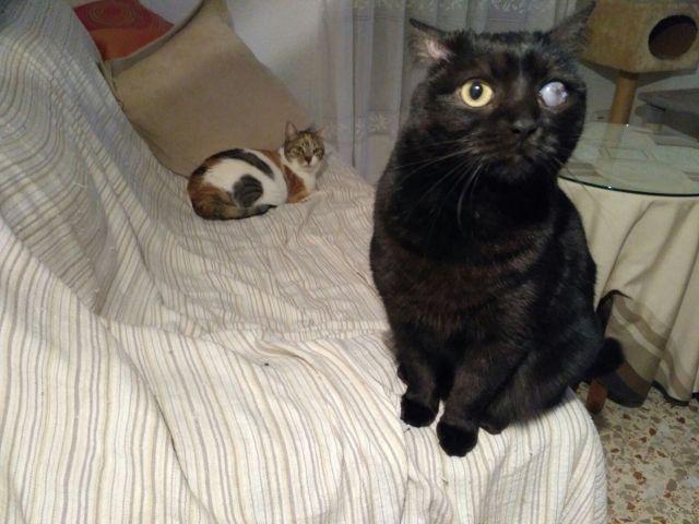 mignon adolescent chatte sexe