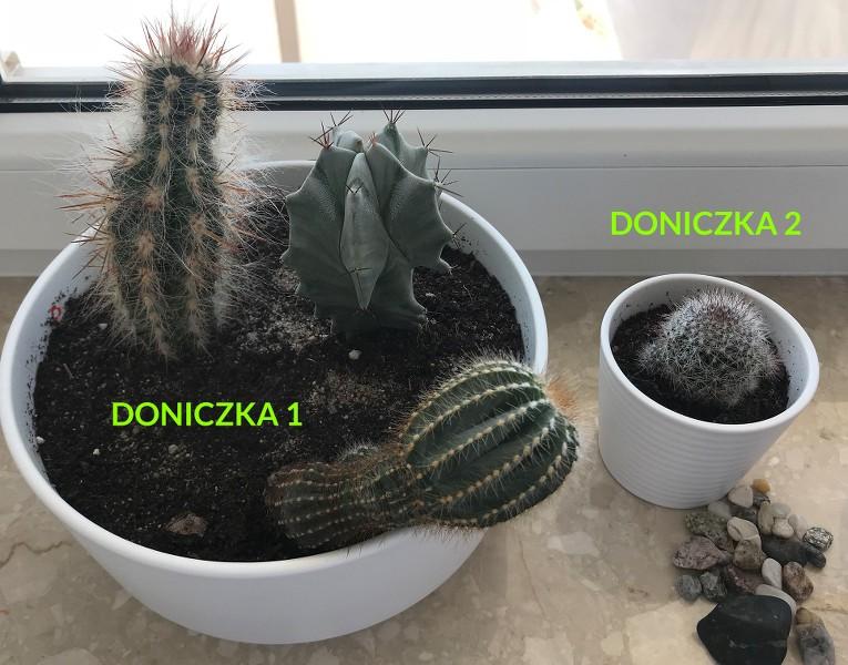 Zobacz Wątek Choroby I Dolegliwości Kaktusów I In