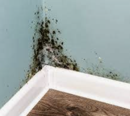 Mold Inspection Point Venture Texas