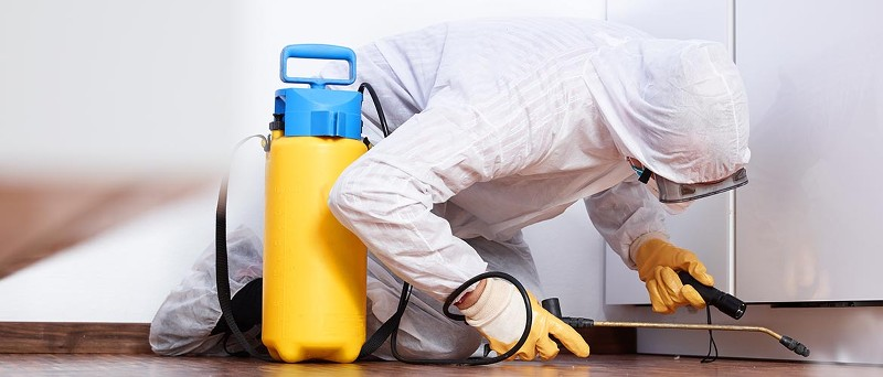 Mold Removal & Inspection services TX