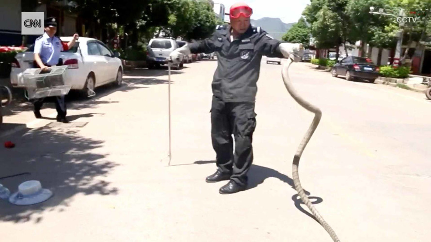Minivan Car Snake China